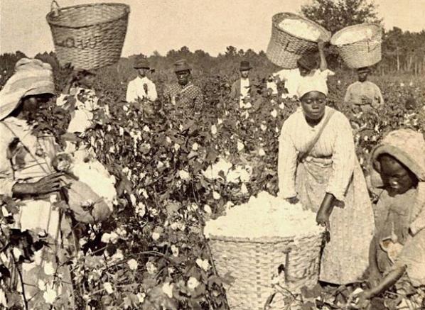 slaverycotton