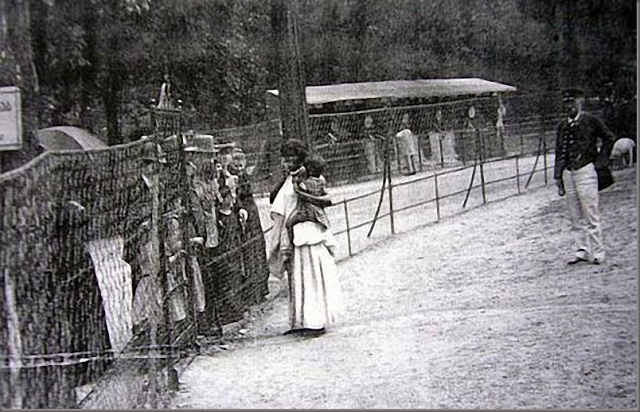 "This is another ""Negro Village"" in France. It was called ""The World Fair,"" where nude or semi-nude Black women and children were presented in cages."